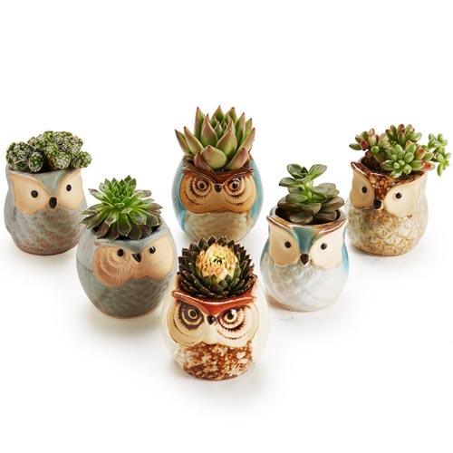 Succulent-Plants | Sympathy Gift Ideas