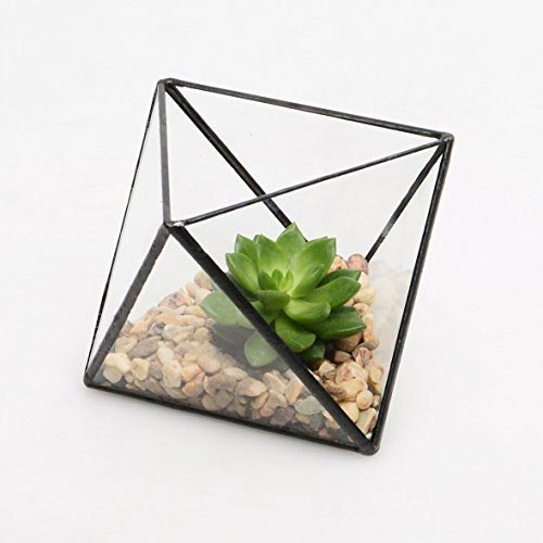 terrarium | Client Gift Ideas